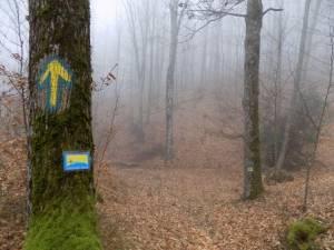 Ακύρωση διοργάνωσης Sougliani Trail & μετατροπή σε ανοικτή προπόνηση!
